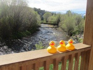 Ducks by the Frasier River