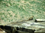 Marmots on train platform