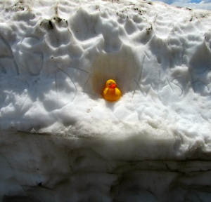 I'm in a 5 foot snow bank in Rocky Mountain National Park
