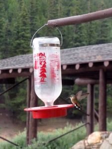 Hummingbird with wings in action