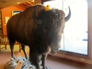 I am on buffalo.  It is tall