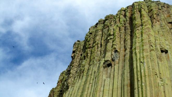 Turkey vultures around Devils Tower