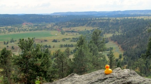 Cattle country behind Devils Tower