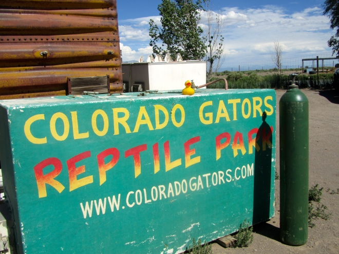 Colorado Alligators!!!