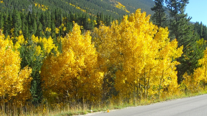 Aspens and mom left me on the road