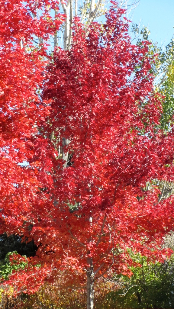 Love red leaves