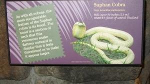 Cobra information