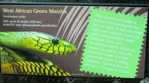 Be careful around this snake