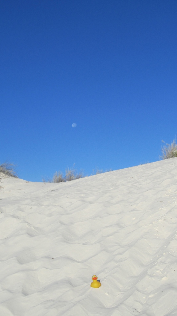 White sand, blue sky, Zeb the Duck and the moon