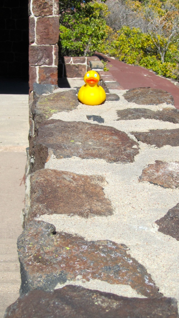 Zeb the duck on lava and cement wall
