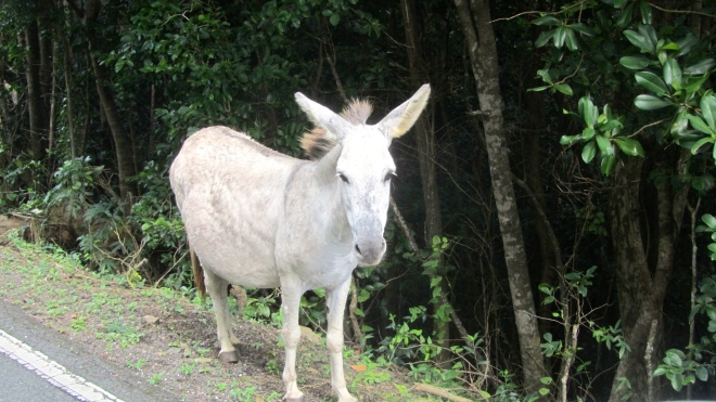 Wild but friendly donkey