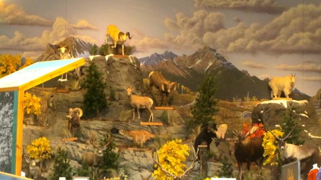 Great wildlife display