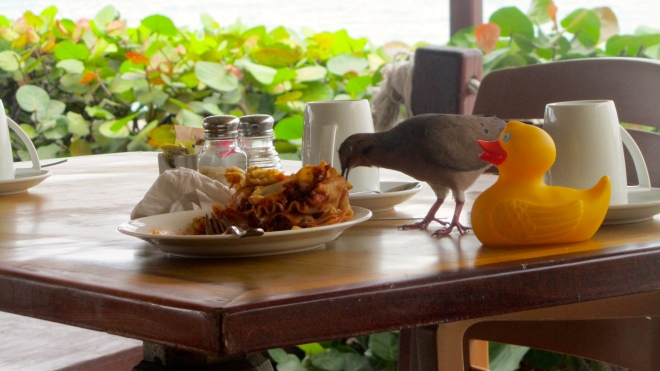 Birds need breakfast, too