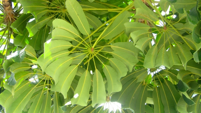 Different view of leaves