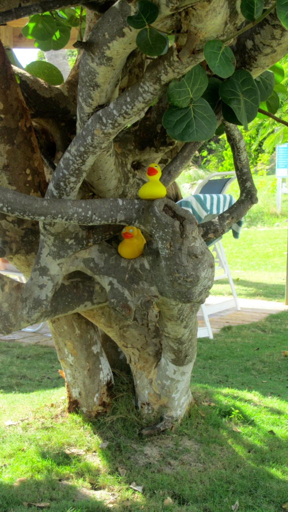 Great tree trunk for ducks