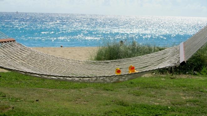 We are liking hammocks