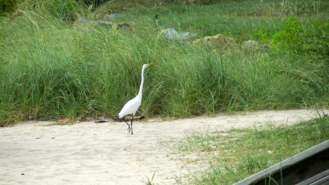 Our white crane