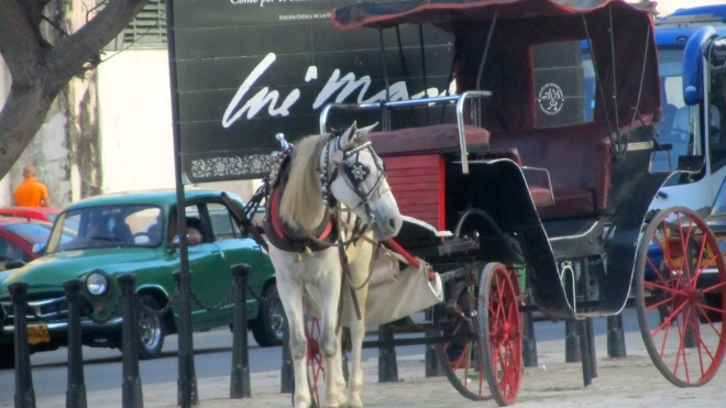 Ride in a horse carriage