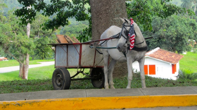 Horse with cart