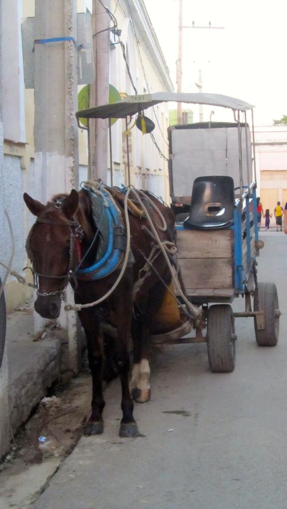 Very patient horse