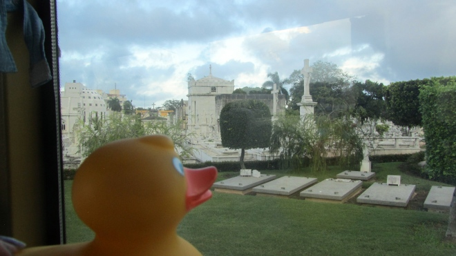 Zeb the Duck's view from the bus