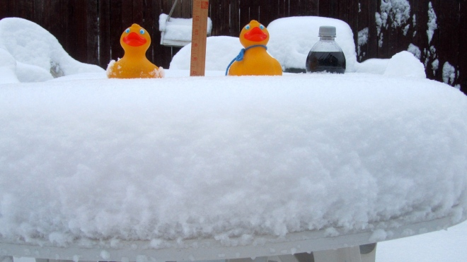 Ducks on snowy table