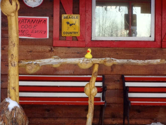 Eider on spruce rail with bumps