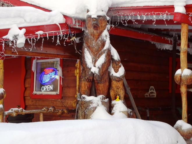 Eider on snowy bears
