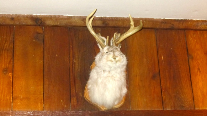 What's a jackalope?
