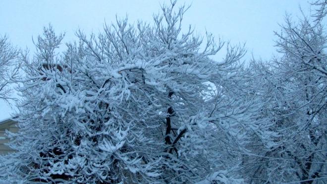 Tree with spring snow