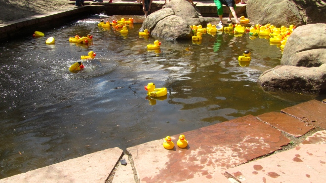 So many ducks