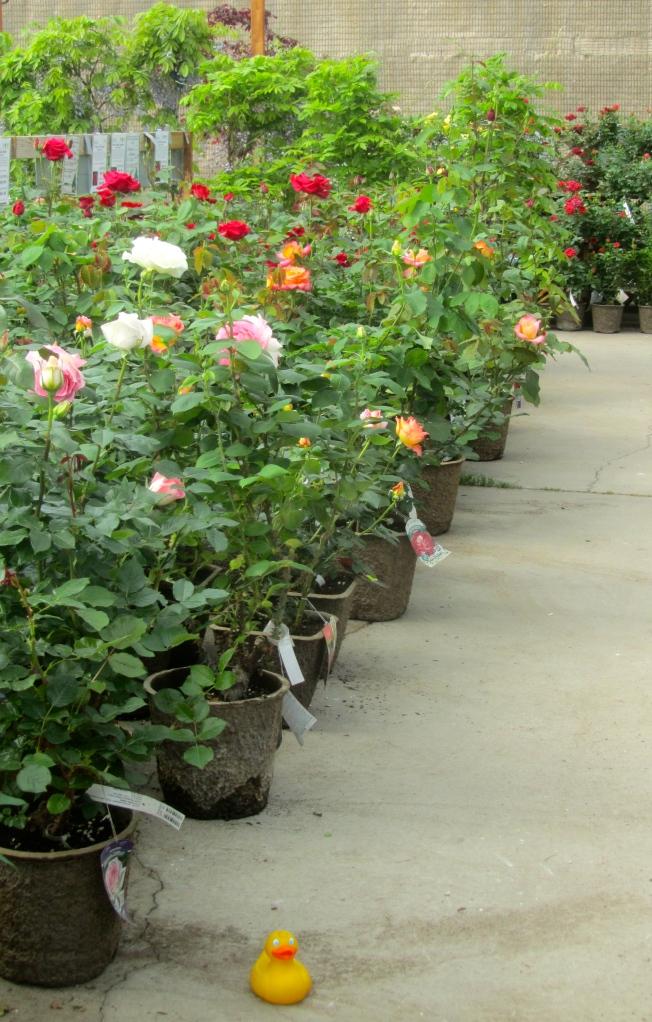 Roses smell so good