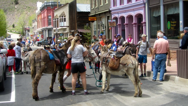 No cars today, just burros