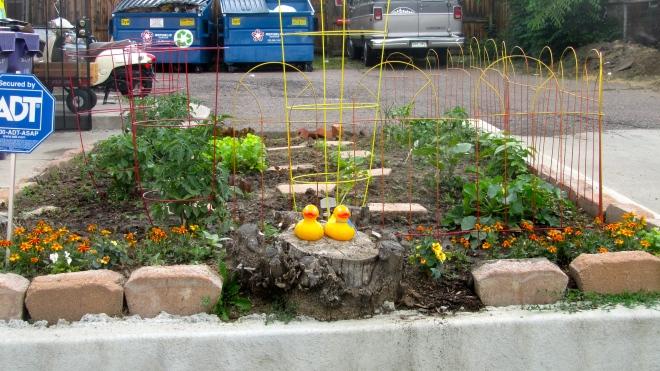 Vegetables growing