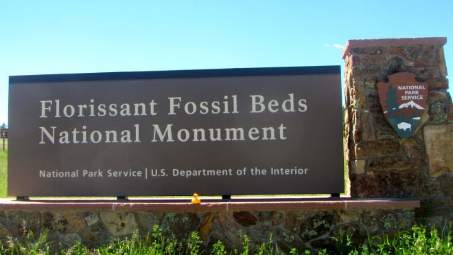 Let's see the fossils!
