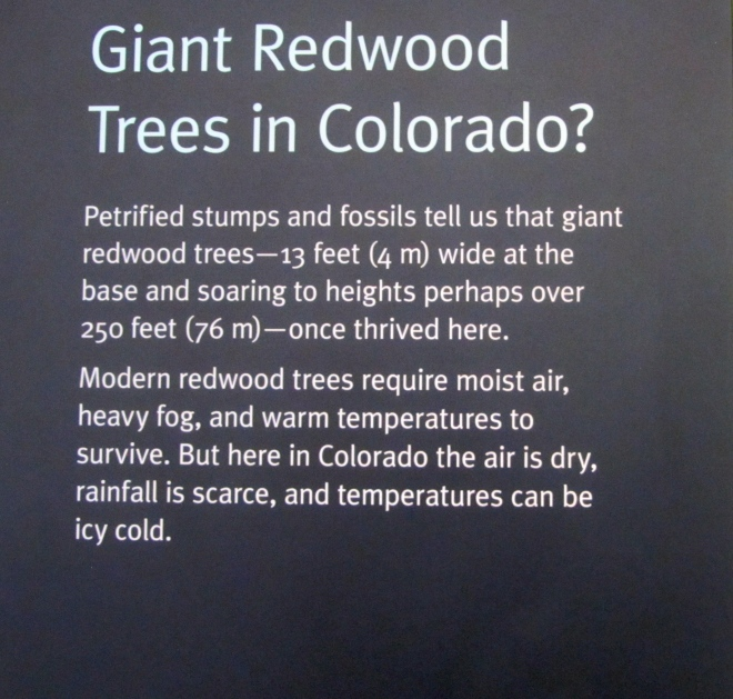 Yes.  Redwoods in Colorado