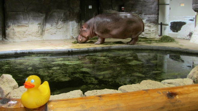 Bert has his own pool