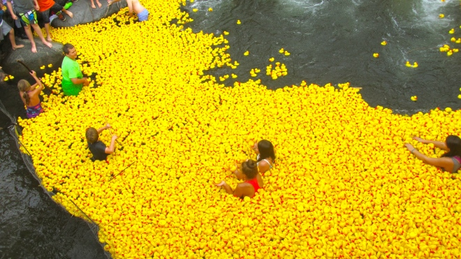Some of the 13,000 ducks