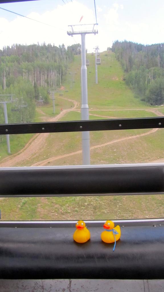 The ducks first gondola trip