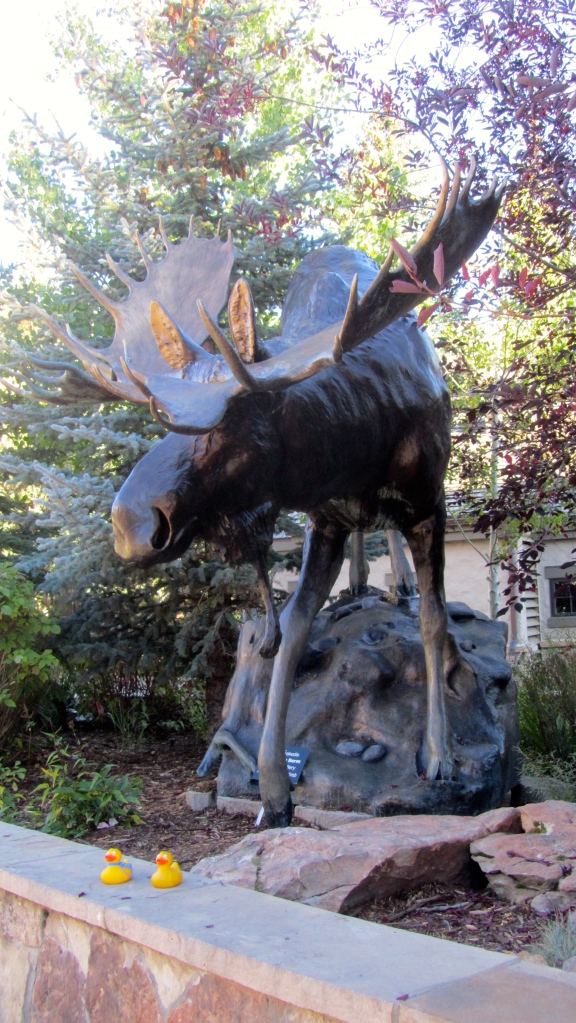 Moose certainly are big