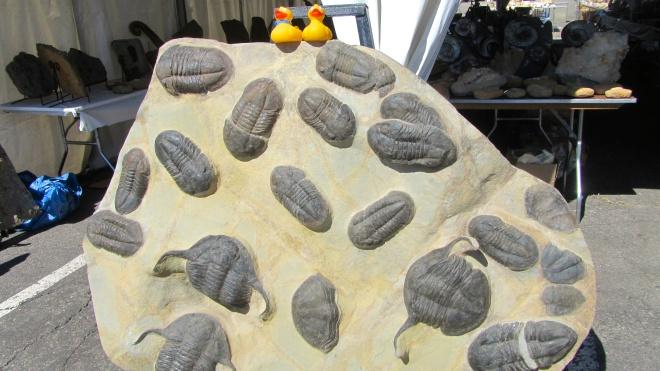Huge fossils