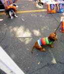 His hat slide.  Fantastic dog