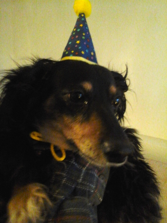 Hickory with his party hat