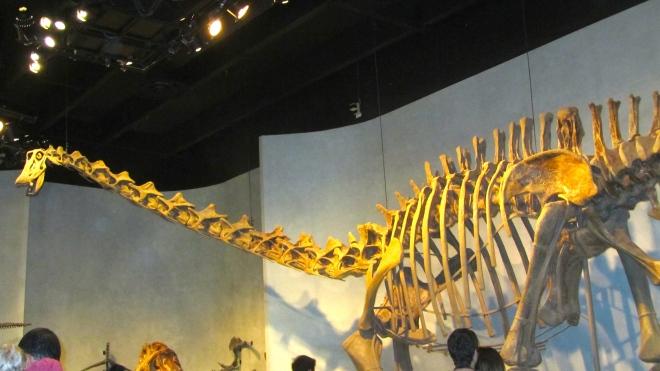 Long necked dinosaur