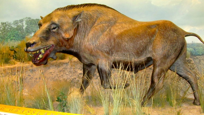 He lived in Nebraska about 20 million years ago.