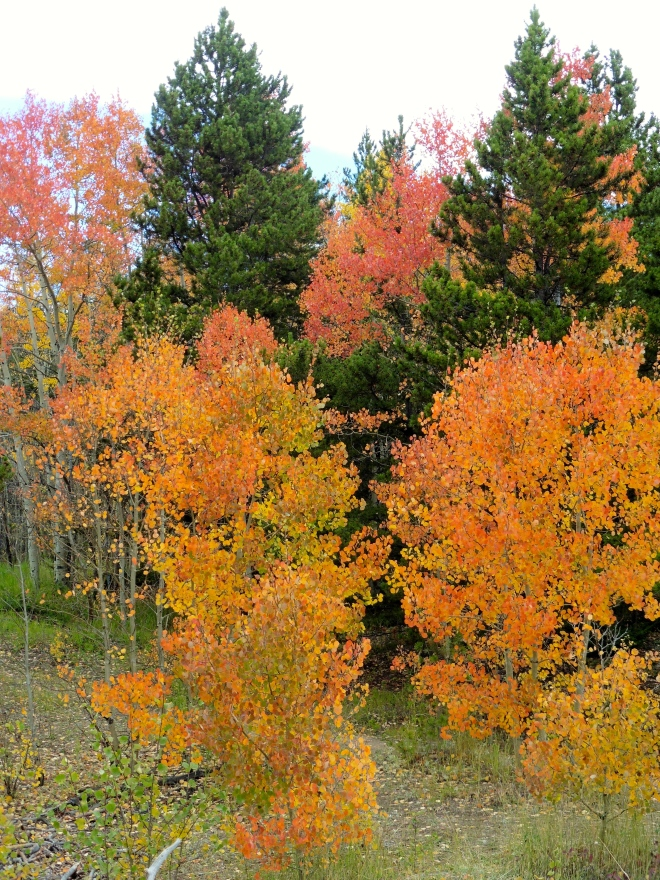 A mix of Colorado fall colors