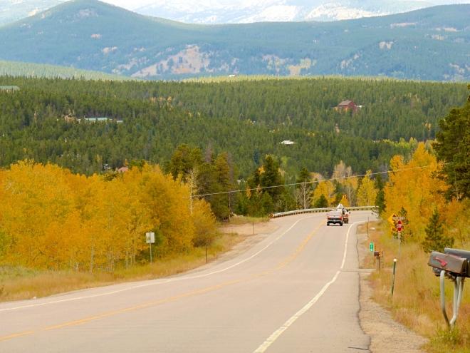 Golden aspen along the road