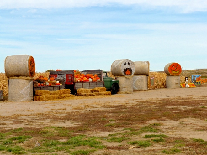 WOW   Hay and pumpkins