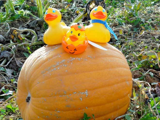 Ducks on pumpkin with pumpkin saw.  Some call it a plastic knife
