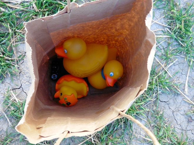 Ducks travel in a paper bag